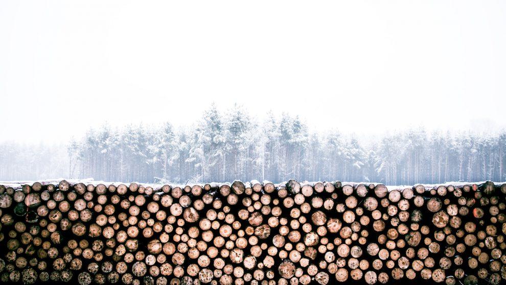 History of the Christmas Yule Log